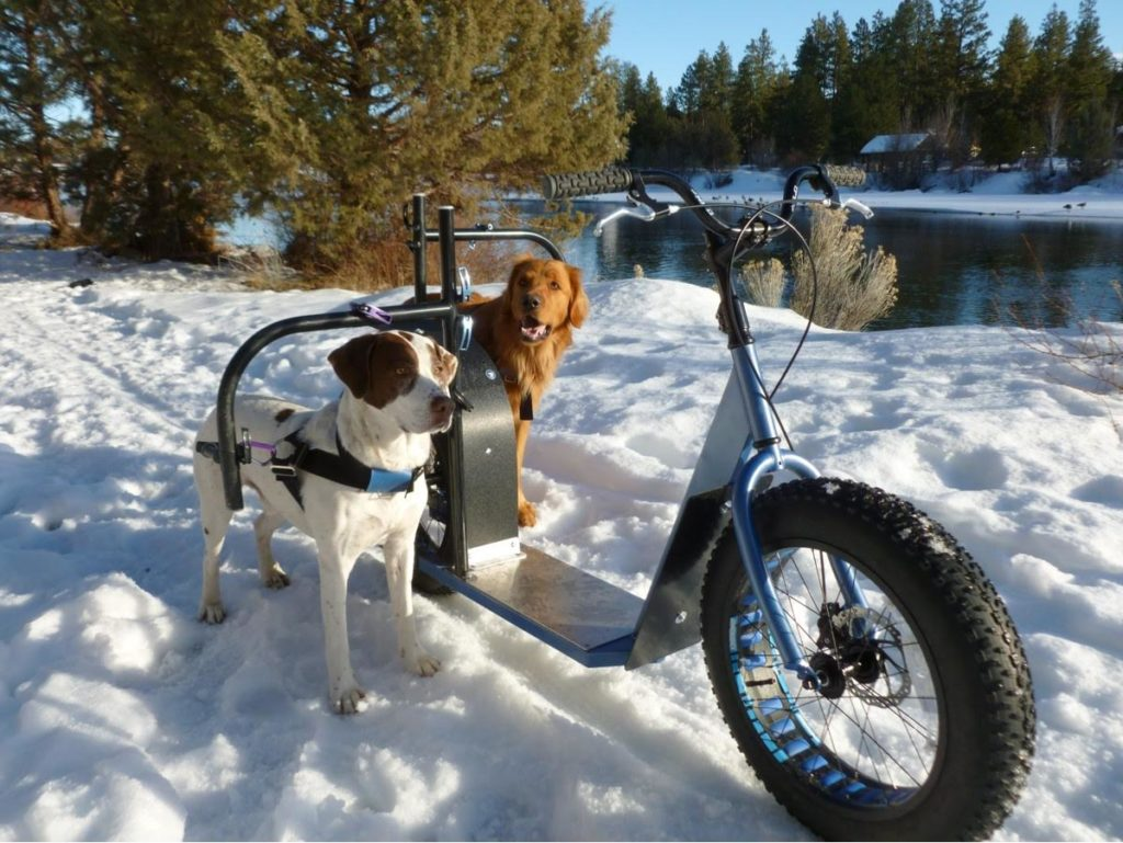 dog powered dirt scooter